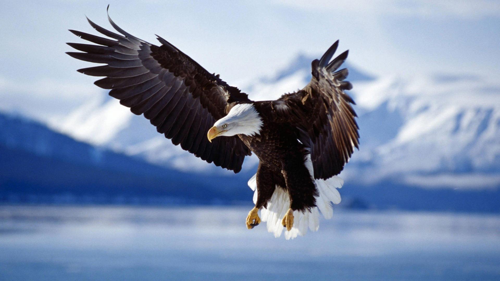 amazing-eagle-1920-1080-6723